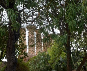 agrigento columnas entre arboles
